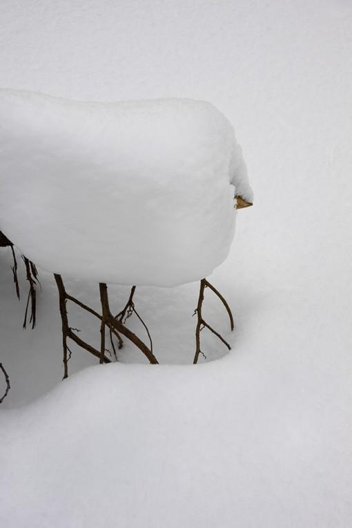 Snow Form